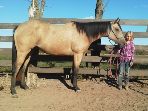 Buckskin Mare For Sale Kid Safe Trail Rides Awesome Barrel Racing